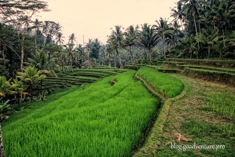 Bali Pura Gunung Kawi 12
